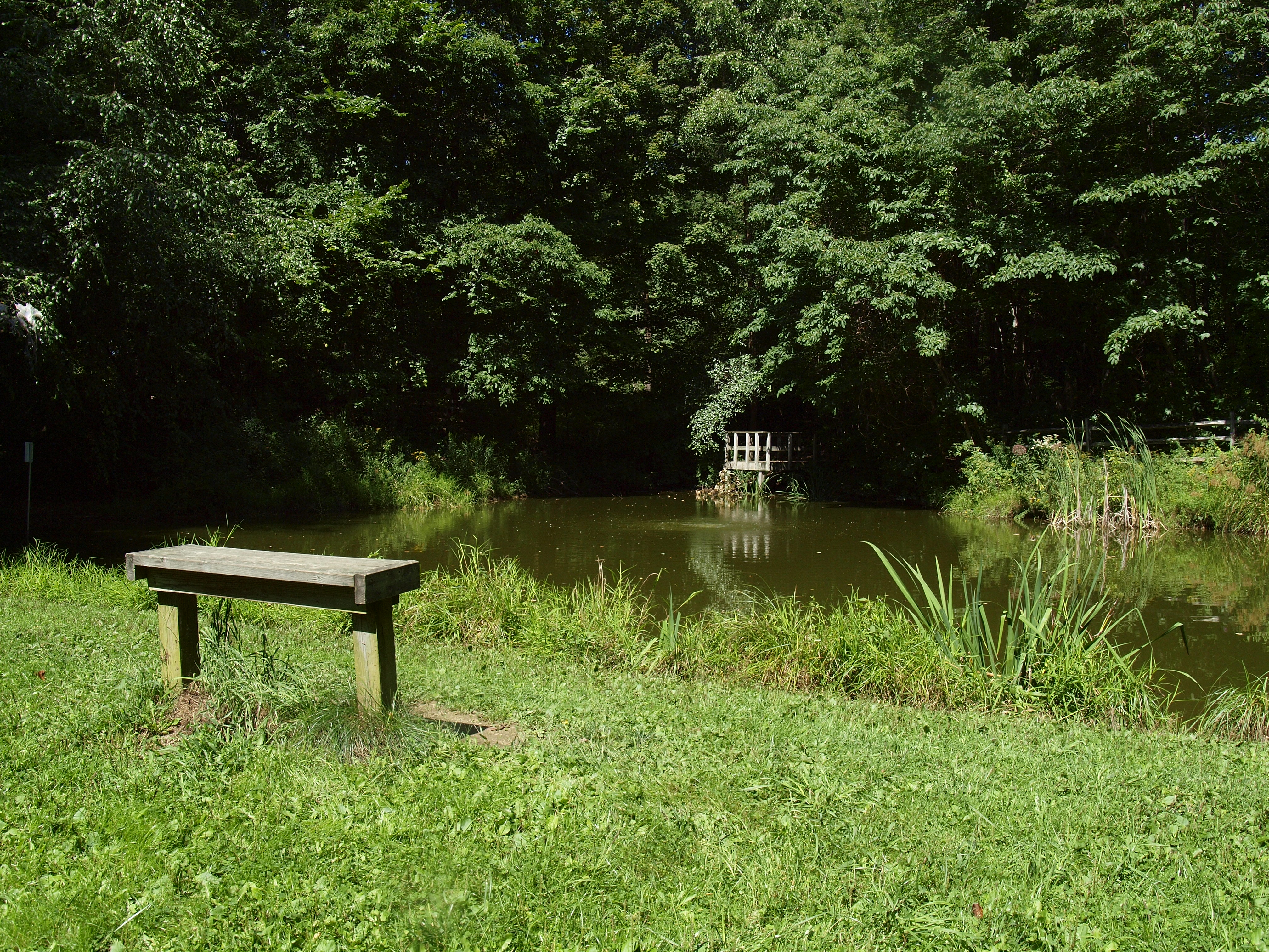 A bench in the grass overlooks a pond on the Nature Center property