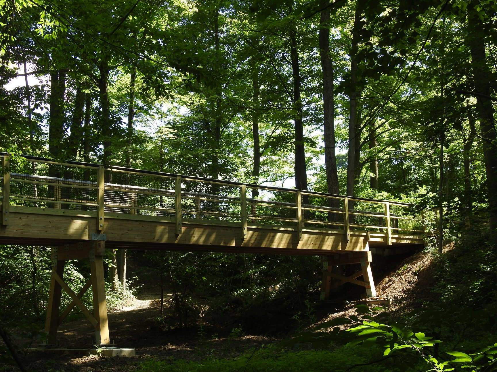 A bridge in the woods of the Nature Center property
